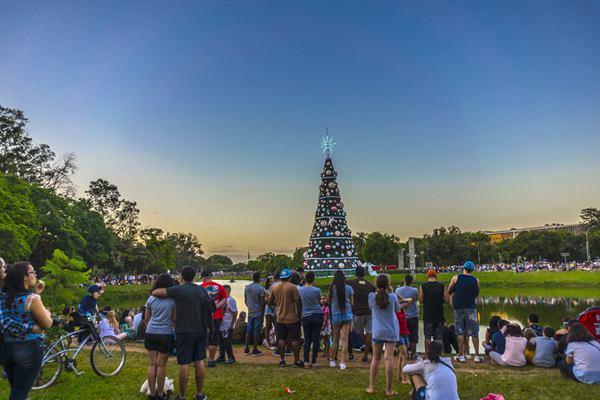 巴西圣保罗一圣诞树高43米 已成为当地特色景点