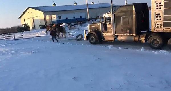马力十足!美两驮马成功牵引半挂卡车上结冰山坡