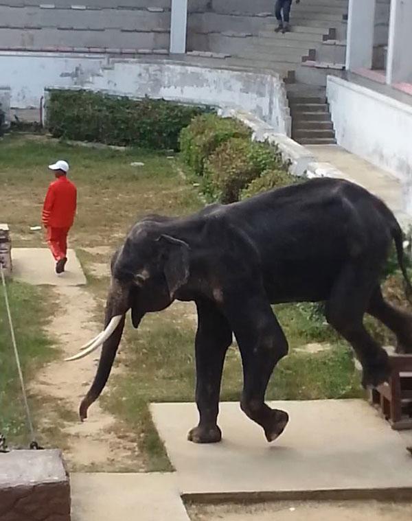 泰动物园萧条冷清 大象饿成皮包骨还被迫表演