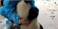 萌萌哒大熊猫要举高高