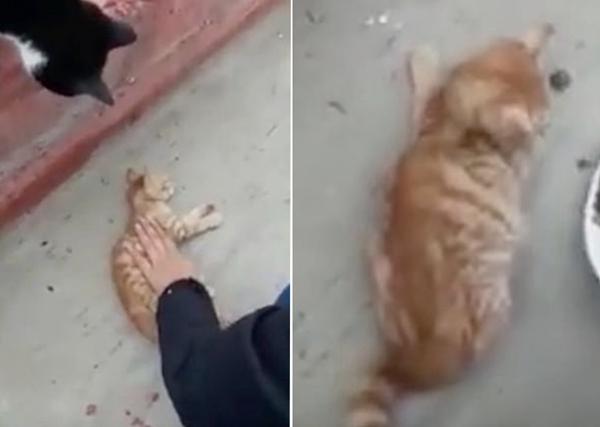 土耳其救援人员用心肺复苏术挽救突发心脏病小猫