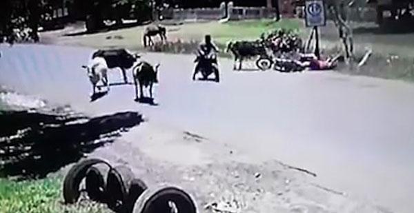 """成精了!""""功夫""""牛使出回旋踢将一女子踢下摩托"""