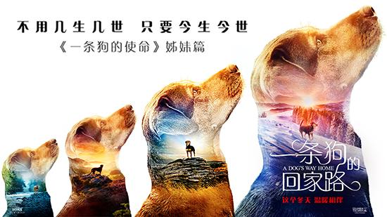 《一条狗的回家路》确认引进曝新预告
