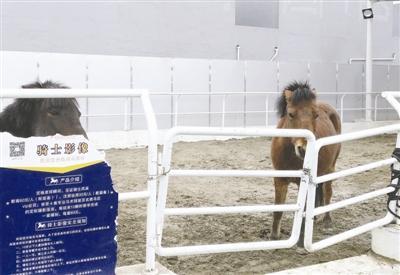 """""""旋转真马""""重新营业引争议:没虐马?但虐心呀!"""