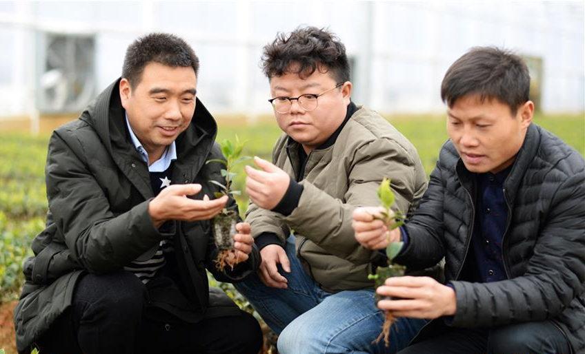 贵州玉屏打造山地油茶创新基地