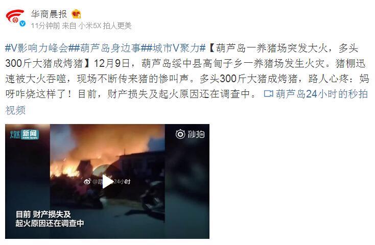 葫芦岛一养猪场突发大火,多头300斤大猪成烤猪
