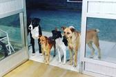 巴西4只宠物狗医院门口等主人