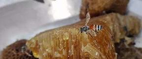 同仁堂陷过期蜂蜜门 健康食品市场现状