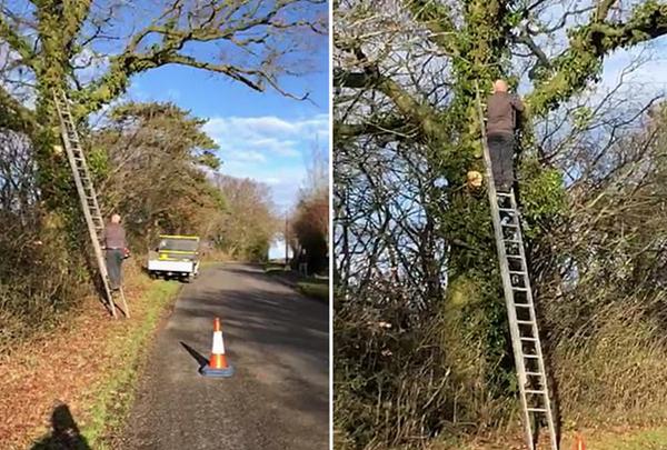 哭笑不得!修树工锯断树枝反被砸中摔下梯子