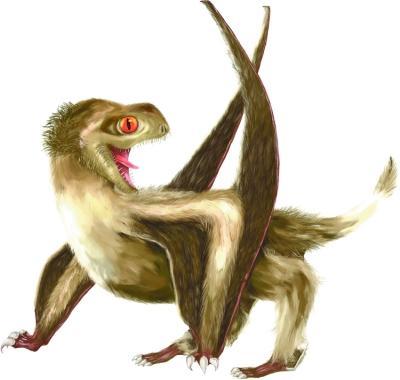 科学家发现翼龙具有羽毛状结构