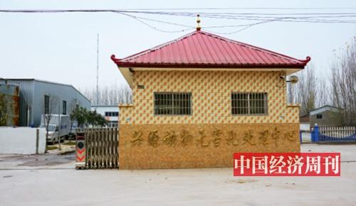 河南尉氏畜禽处理中心涉污调查:死猪堆成山 臭气熏天