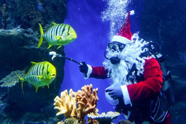"""俄罗斯圣诞老人与鱼""""共舞""""引游人驻足观看"""