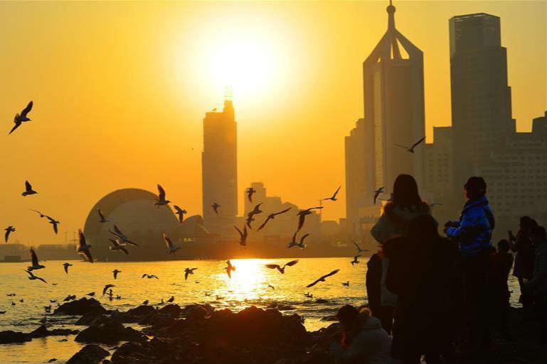 红嘴鸥翔集青岛越冬 栈桥景区吸引游人