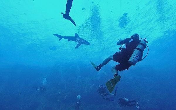 惊险!德国游客在红海潜水时遭白鳍鲨咬伤腿部