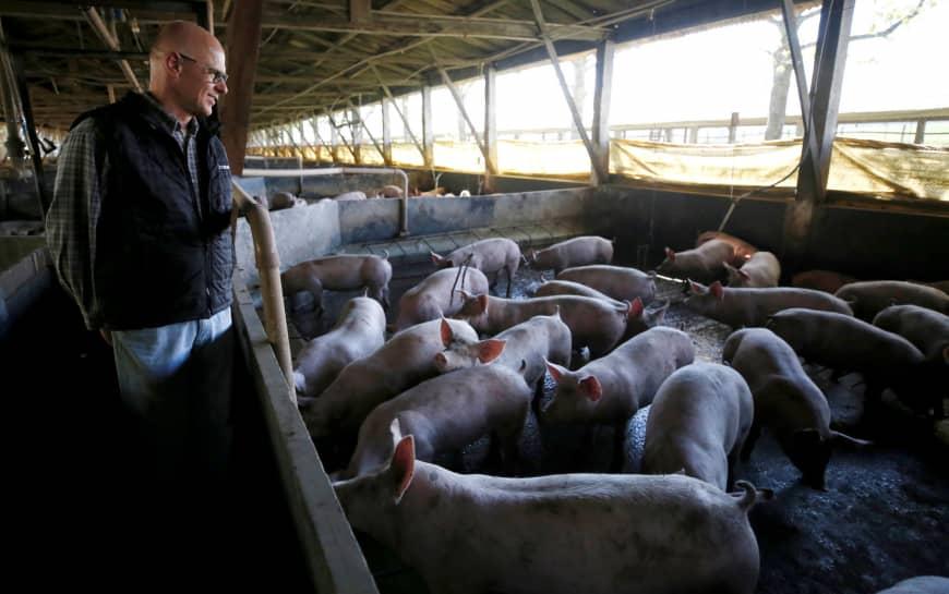 研究发现巴西猪肉中含有耐抗生素细菌