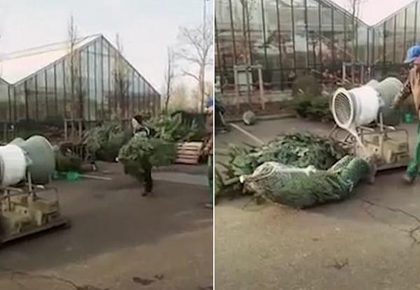 德小伙跳进圣诞树打包机 体验被打包乐趣