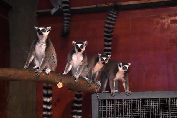 重庆动物园为动物取暖过冬