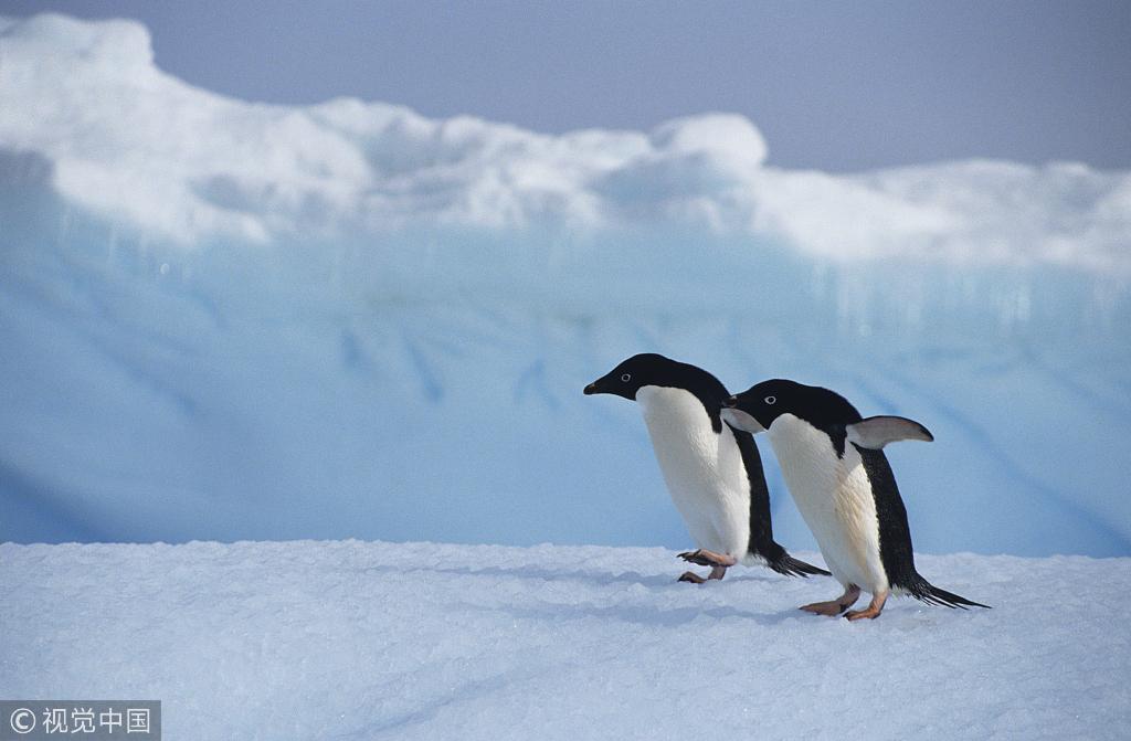 """为抵抗孤僻环境 南极科学家创""""心理冬眠""""模式"""