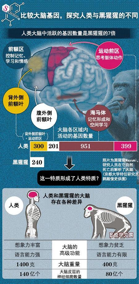 是什么决定了人与黑猩猩的不同?