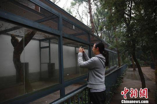 广西柳州动物园女兽医:最难接受和动物死别(图)