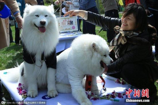 各地出台养犬政策受关注