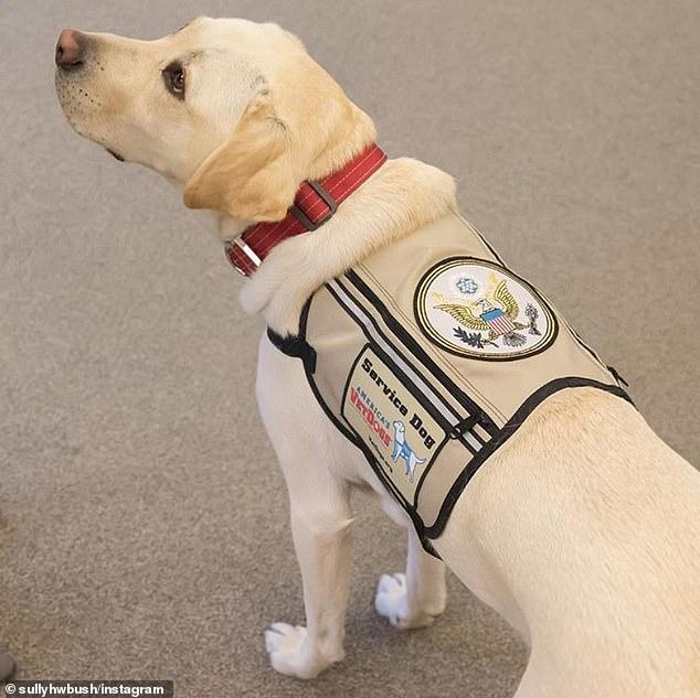 老布什服务犬获美国总统徽章 将继续帮助退伍军人