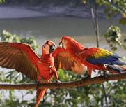 老板收购8只驯养鹦鹉获刑两年