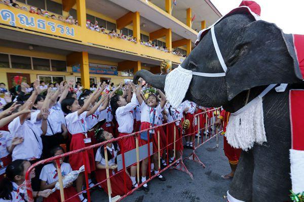 大象穿新衣!泰国曼谷大象身着圣诞服表演精彩节目