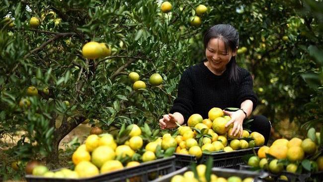 咸宁市工商联通城县开展精准扶贫