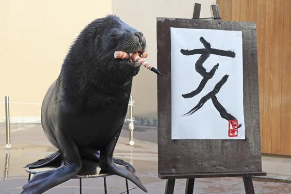 """才气逼人!日本海狮挥毫书写汉字""""亥"""" 迎农历猪年"""