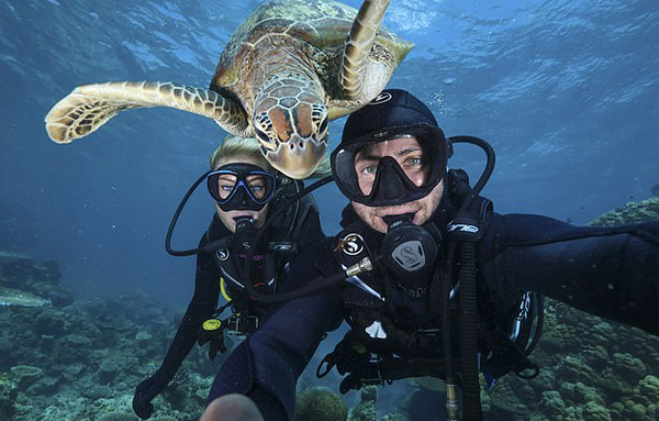 智利潜水员水下自拍遭大海龟抢镜