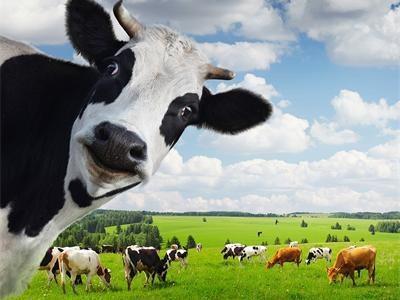 九部门发文促奶业振兴:力争2025年全国奶类产量达4500万吨