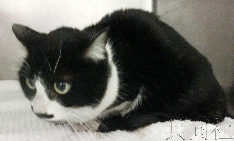 百里寻猫!日本人靠微型芯片找到170公里外走失宠物猫