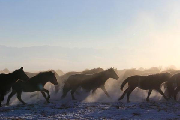 新疆巴音布鲁克高寒草原万马踏雪
