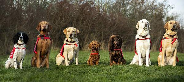 英医疗侦测犬能嗅出疾病 燃起数百万患者希望