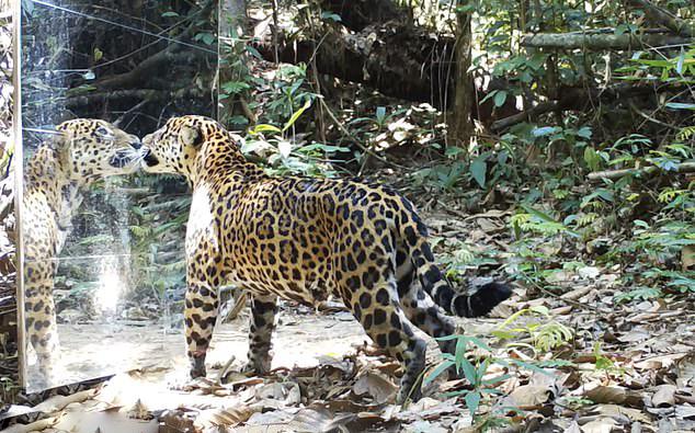 英摄影师在亚马逊雨林立镜子吓坏动物