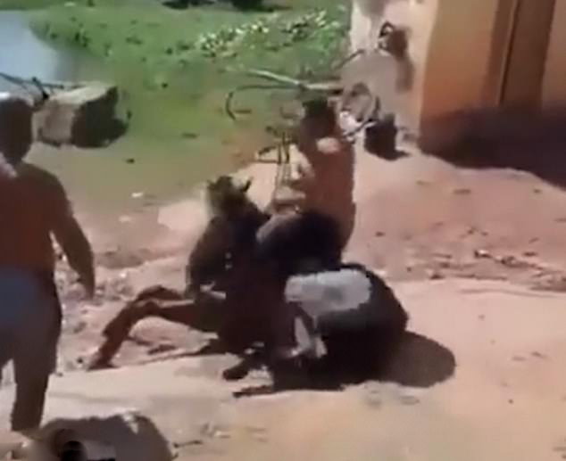 残忍!超重男子强行骑马致马跌倒