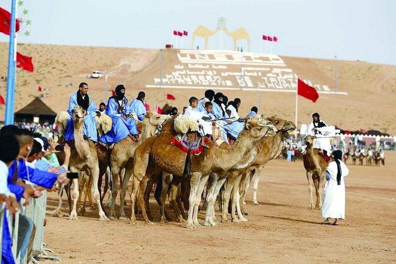 撒哈拉骆驼大赛还赛诗歌