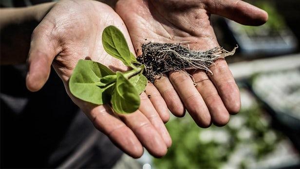 科学家破解植物光合作用 有望使作物产量提高40%