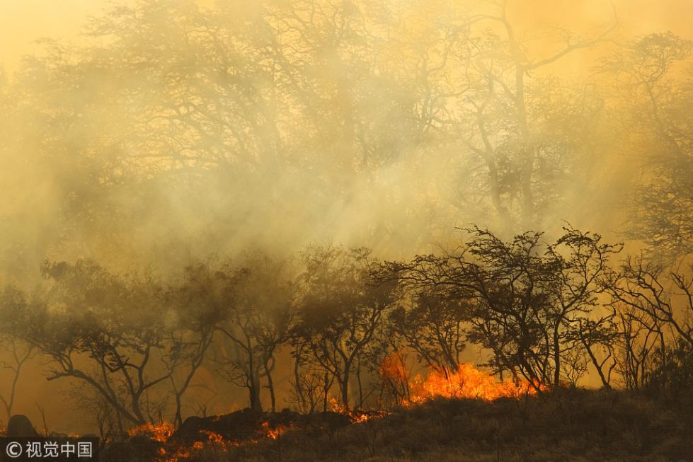 澳大利亚山火向城市蔓延 引发当地航班混乱