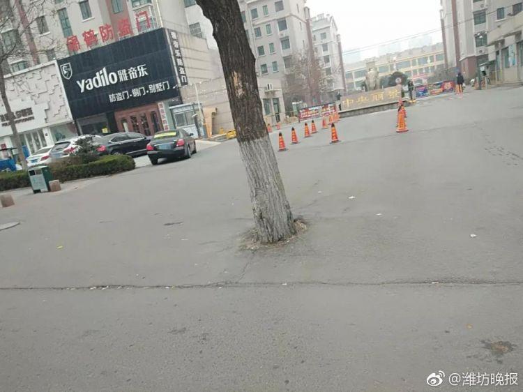 潍坊城区多处存在大树挡路碍事问题 是否挪挪窝