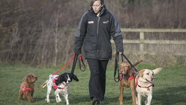 英国医疗侦测犬能嗅出疾病 燃起数百万患者希望