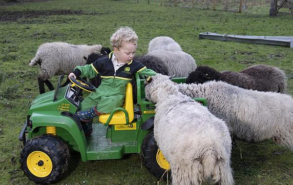 英2岁萌娃帮父母照顾农场动物 不爱玩具爱劳动