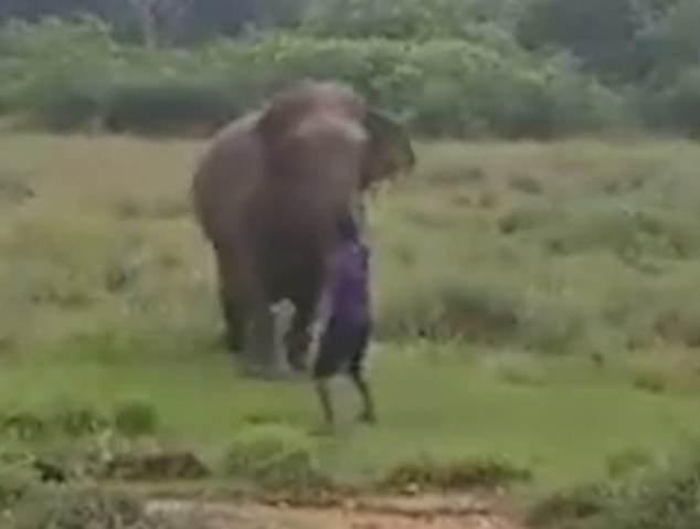 斯里兰卡一男子欲催眠大象反被踩踏致死