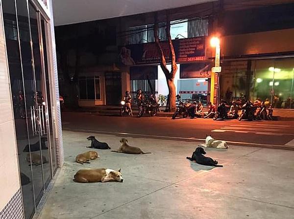 忠诚的守护!六犬狂追救护车在医院外等主人出院