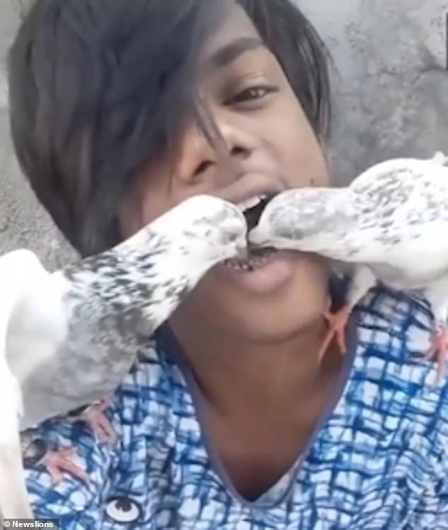 喂鸟新技能!印男子用嘴当喂食器喂食宠物鸽