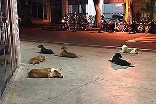 ?#39029;?#30340;守护!六犬狂追救护车在医院外等主人出院