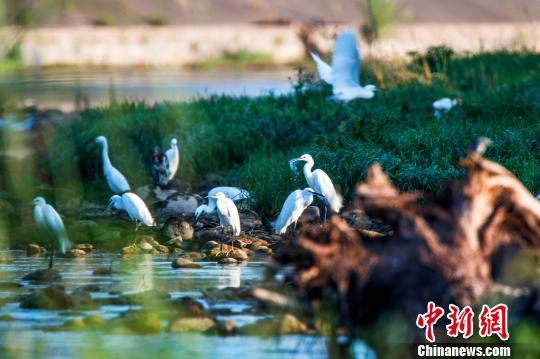 湖北远安沮河国家湿地公园试点通过国家级验收