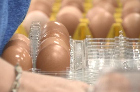 台湾人快吃不起茶叶蛋了!鸡蛋价飙升,限购10颗