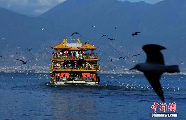 大理洱海1月1日起全年封湖禁渔:对银鱼实行特许生态捕捞